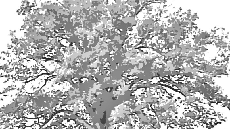 """Disponibile sui canali social di Matteo Macchioni il nuovo brano """"Quel grande albero"""""""